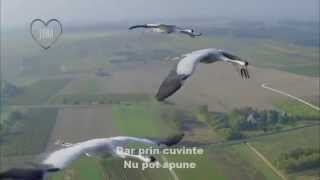 VITAS - Strigatul Cocorului / Crane