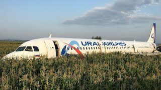 Plane Hits Birds And Lands In Cornfield