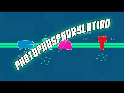 Photophosphorylation - Biol 112 at UBC