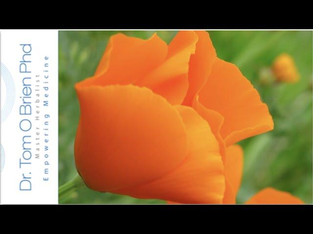 Californian Poppy health benefits