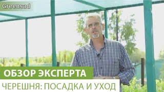 Черешня: посадка и уход(В этом видео наш эксперт расскажет о правилах посадки черешни. Купить саженцы черешни можно здесь http://greensad.u..., 2015-08-21T01:51:32.000Z)