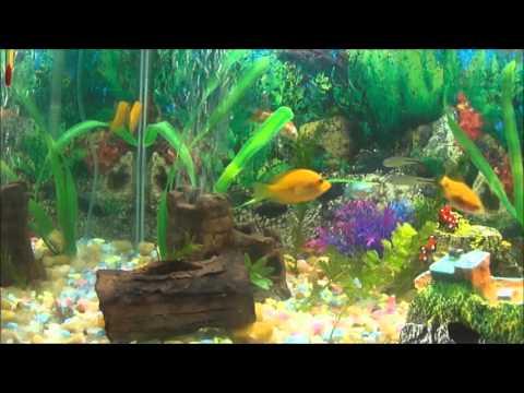 aquario de agua doce com peixes comunitario - YouTube