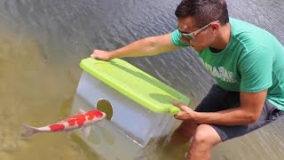 Fish Trap Catches Colorful Pond GIANTS FOOD!!
