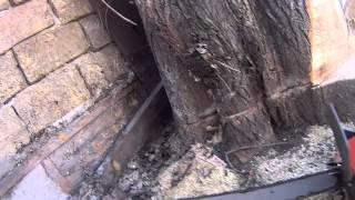 Спил деревьев Симферополь(, 2015-03-12T09:59:48.000Z)