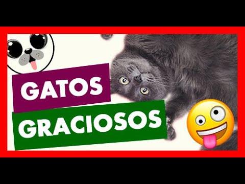 💙💚💛 Videos de gatos CHISTOSOS  y LOCOS 😺😸😹 【 Videos de Risa de Gatos 】