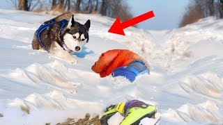 Most AMAZING Animals That CHANGED The World!