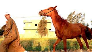 سرقوا حصان الحاج فزاع عشان ضحك على الحاج بسيونى فى السمك زوقلة ينتقم لأبوه