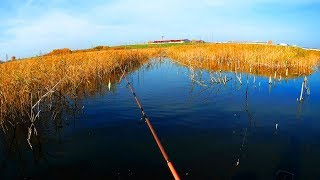 Ловля щуки октябре на спиннинг Рыбалка на щуку в корчах