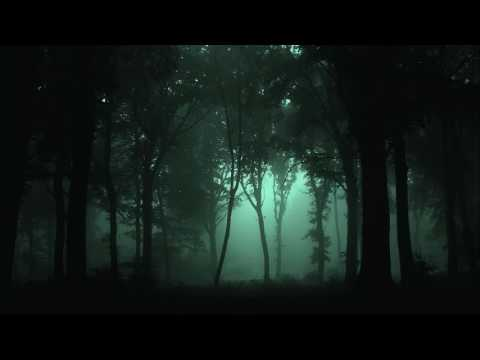 Sleep Well and Heal - Summer Night at Woods Ambience