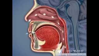 Щелканье в челюсти - причины и последствия(http://spine5.com/esteticheskoe-modelirovanie/ Клиника Доктора Игнатьева., 2014-05-31T10:22:00.000Z)