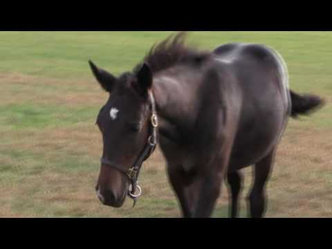 Name that Foal! | Saratoga Casino Hotel