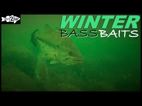 6 Proven Winter Bass Baits For Most Situations