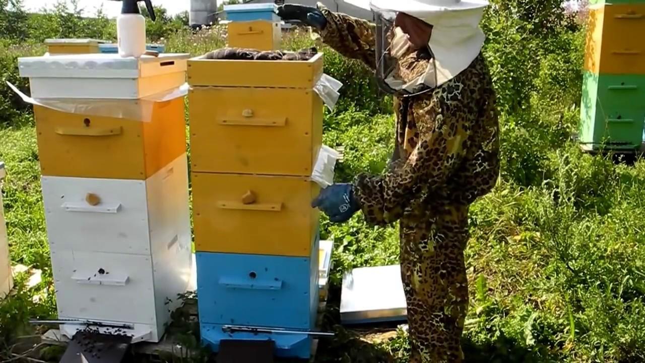 Пчеловодство начинающим как сделать отводок 5