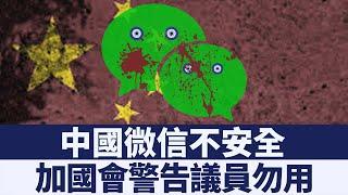 中共監控微信或干涉加拿大聯邦大選 新唐人亞太電視 20190731