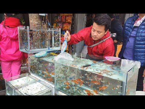 Một số loài cá cảnh rẻ và đẹp nhất Việt Nam - Mosh beautiful fishes   Foci