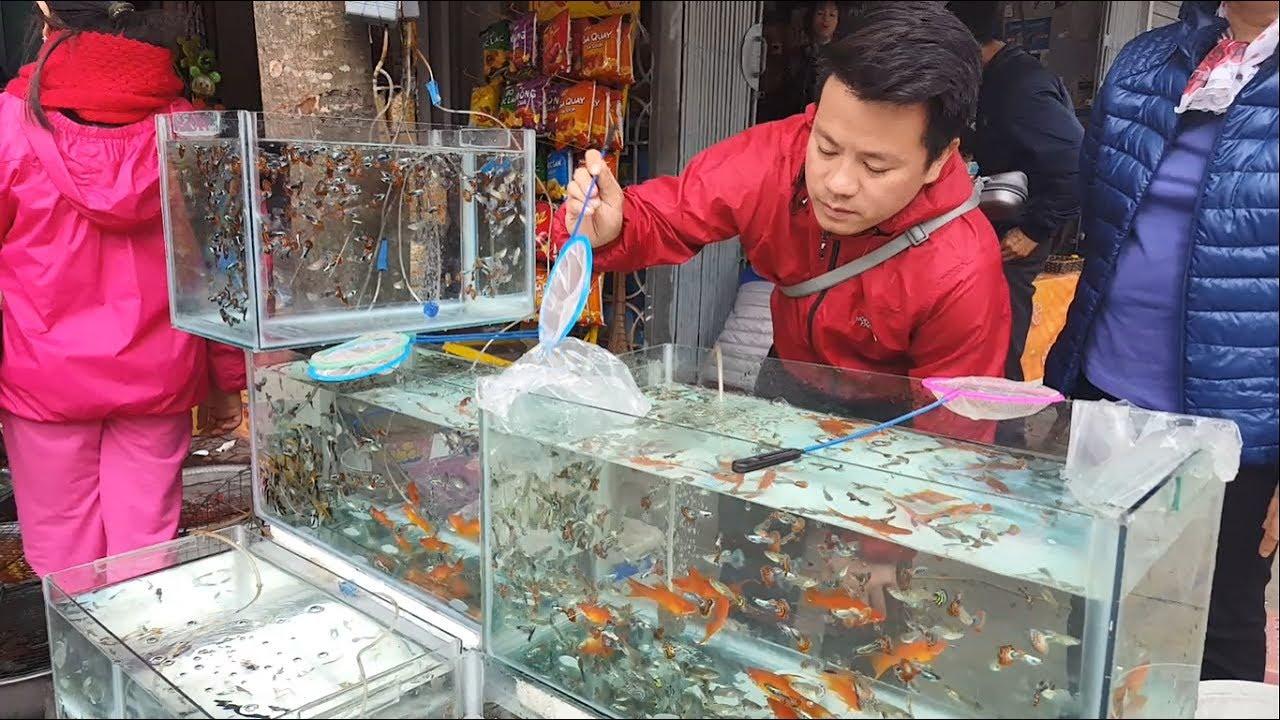 Một số loài cá cảnh rẻ và đẹp nhất Việt Nam – Mosh beautiful fishes