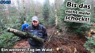 Brennholz | Waldeinsatz, aber diesmal mit Kameramann | Yanmar C10R | Pinch A Log | Mr. Moto