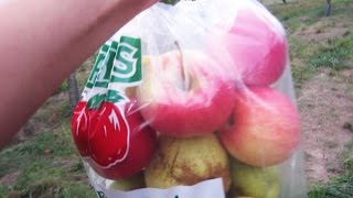 Apple Picking in New York 2015 - Stuart's Farm Apple Picking 2015