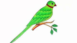parrot drawing easy draw simple step drawings clipartmag paintingvalley