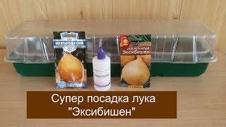 "СУПЕР ПОСАДКА ЛУКА ""ЭКСИБИШЕН"""