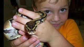 What Pet Snake Should I Buy? SnakeBytesTV
