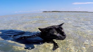 Cat loves to swim and doesn't want to stop!