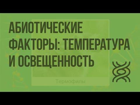 Абиотические факторы: температура и освещенность. Видеоурок по биологии 11 класс