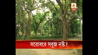 Allegation of Destroying The Greenery of Rabindra Sarobar Lake by the construction of road