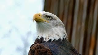 Познавательное видео про орла