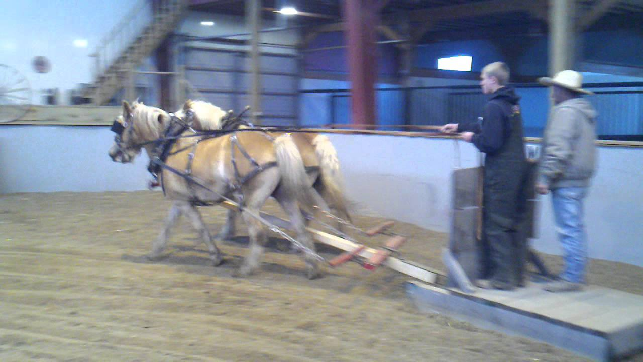HAFLINGER TEAM PULLING STONEBOAT SLED - YouTube