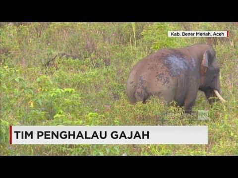 8 Warga Aceh Ini Mengabdikan Diri Sebagai Tim Penghalau Gajah