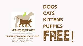 AUGUST ADOPTION CRISIS AT CHARLESTON ANIMAL SOCIETY