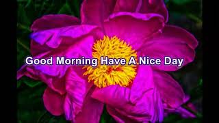 Good Morning Have A Nice Day Free Video Download for Whatsapp Status