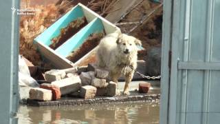 Severe Flooding Sparks Evacuations in Kazakh City of Petropavlovsk