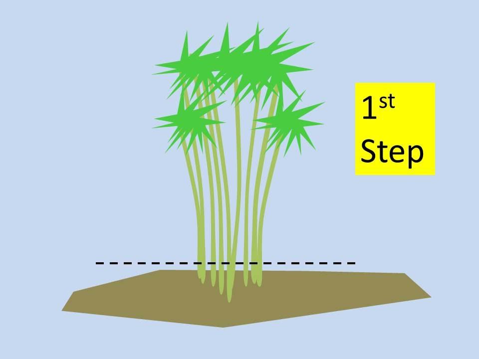 How To Kill Bamboo 3 Steps Youtube