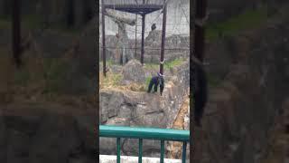 友達と動物園に行ってチンパンジー煽ってたらこうなった.