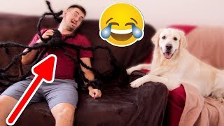 My Funny Dog Protects Me From Giant Spider [BEST PRANK EVER]