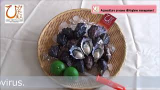 "【JAPAN OITA NAKATSU】 PREMIUM OYSTER ""Higata-Bijin"""