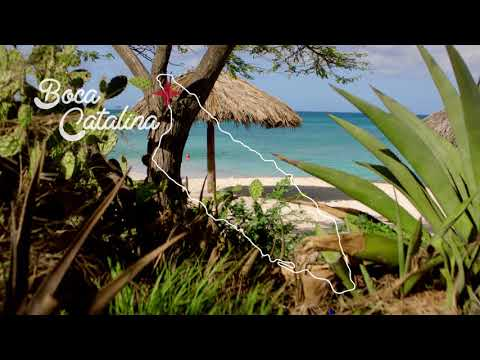Discover Boca Catalina beach with Lincoln : The Locals Travel Guide to Aruba