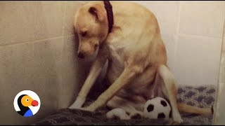 'Saddest Dog In the World' Is Homeless Again: How You Can Help | The Dodo