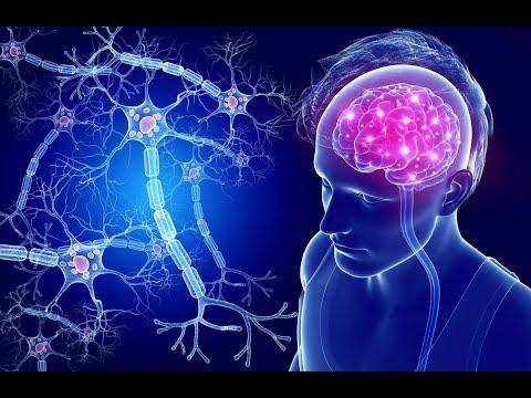 Как усовершенствовать свой мозг?