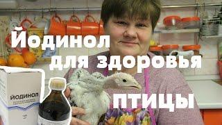 Йодинол! И Ваша птица будет здорова!(, 2016-02-29T14:05:15.000Z)