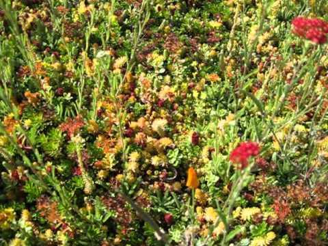 SEDUM TILES with Perennials - Closeup