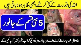 5 Strangest CREATURES Taken On Video  - Urdu Documentaries - Purisrar Dunya