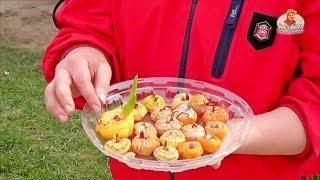 Что сажать осенью на даче: видео-инструкция как садить своими руками, особенности цветов, фото