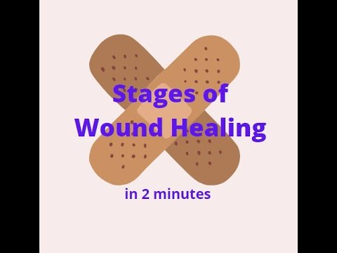 Stages of Wound Healing in 2 mins!