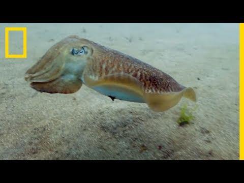 Cette créature sous-marine peut changer de couleur instantanément