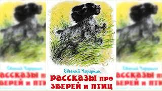 Про больших и маленьких, Евгений Чарушин аудиосказка слушать онлайн