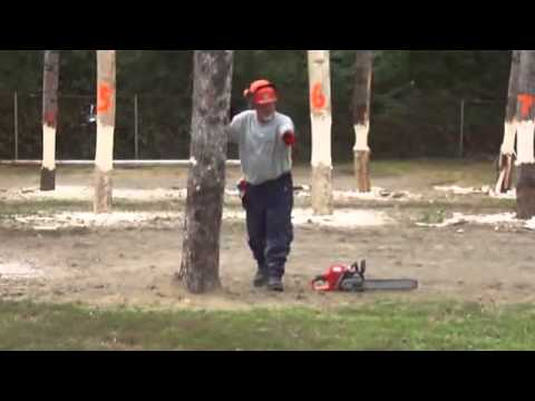 Timber Tree Cutting & Axing Videos