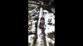 Natural Agility: Dachshund Walks Log